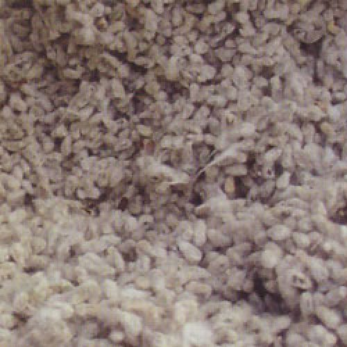 Cottonseed